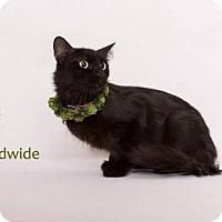 Adopt A Pet :: JOSIE - Yucca Valley, CA