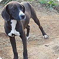 Adopt A Pet :: Conrad I LOVE KIDS - Sussex, NJ