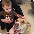 Adopt A Pet :: Nessie