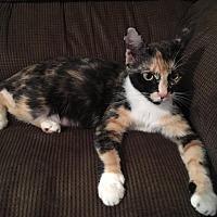 Adopt A Pet :: Cassie - Fredericksburg, VA