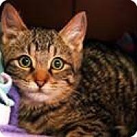 Adopt A Pet :: Turkey - Lincoln, CA