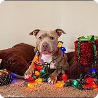 Adopt A Pet :: Bella - Jacksonville, NC