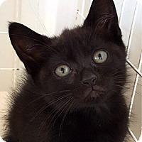 Adopt A Pet :: Rudy - Key Largo, FL