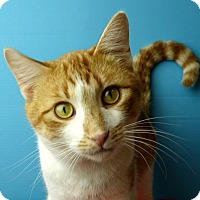 Adopt A Pet :: Plymouth - Columbia, IL