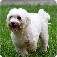 Adopt A Pet :: Lucky - Rancho Santa Margarita, CA