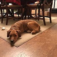 Adopt A Pet :: Beau - Columbia, PA