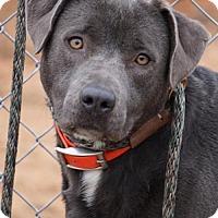 Adopt A Pet :: Fern - Toccoa, GA