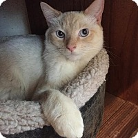 Adopt A Pet :: Flame - Cincinnati, OH