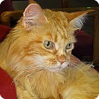 Adopt A Pet :: Noelle - N. Billerica, MA