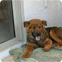 Adopt A Pet :: Chewy - Scottsdale, AZ