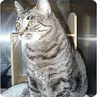 Adopt A Pet :: Abbey - Colmar, PA