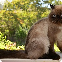 Adopt A Pet :: Zorro - Davis, CA