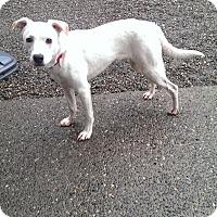 Adopt A Pet :: Alpine - Auburn, WA