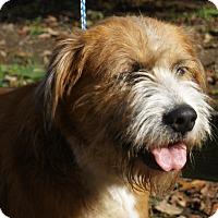 Adopt A Pet :: Bella - Pewaukee, WI