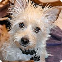 Adopt A Pet :: ANNABELLE - Hurricane, UT