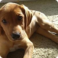 Adopt A Pet :: Lena - Doylestown, PA