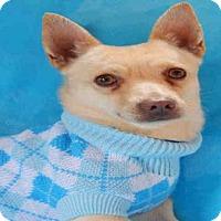 Adopt A Pet :: EDDY - Upland, CA