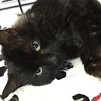 Adopt A Pet :: Rumple - Medford, MA