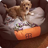 Adopt A Pet :: Mazzy - Orange, CA
