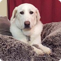 Adopt A Pet :: Emily - Kyle, TX