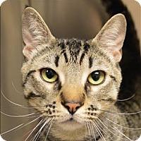 Adopt A Pet :: Richard - Sherwood, OR