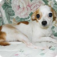 Adopt A Pet :: Beaner - Umatilla, FL