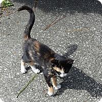 Adopt A Pet :: Van - Parkton, NC