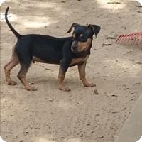 Adopt A Pet :: Columbo - Springfield, VA