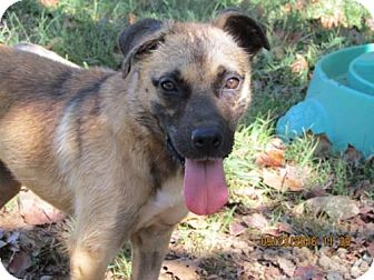 Anatolian Shepherd Mix Dog for adoption in Rutledge, Tennessee - Spirit