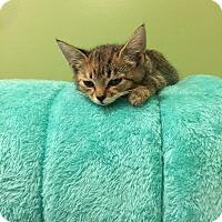 Adopt A Pet :: Sprite - Cincinnati, OH