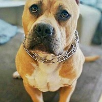Adopt A Pet :: Marvelous Moishe - Los Angeles, CA