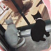 Adopt A Pet :: THESSAILY AND MAGGIE - COURTESY POST - Baltimore, MD
