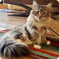 Adopt A Pet :: Elaine - St. Louis, MO