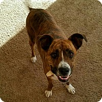 Adopt A Pet :: Bee (Beatrice) - Phoenix, AZ