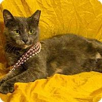 Domestic Mediumhair Cat for adoption in Salt Lake City, Utah - *JEAN*
