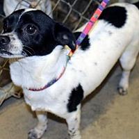 Adopt A Pet :: Oreo - Orland, CA