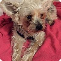 Adopt A Pet :: Archie - Bernardston, MA