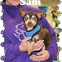 Adopt A Pet :: Sam - Fallston, MD