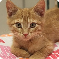 Adopt A Pet :: Chester - Naperville, IL