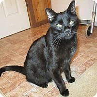 Adopt A Pet :: Bud - Queensbury, NY
