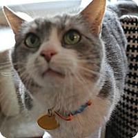 Adopt A Pet :: Luna - Monroe, NC