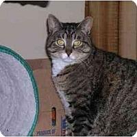 Adopt A Pet :: Penny - Pascoag, RI