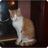Adopt A Pet :: Prince Pee Wee - Hamburg, NY