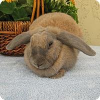 Adopt A Pet :: Ginny - Bonita, CA