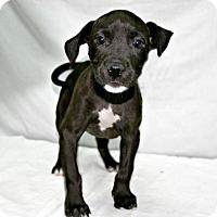 Adopt A Pet :: Duke - Lufkin, TX