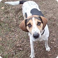 Adopt A Pet :: Cleveland - Ravenel, SC
