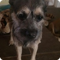 Adopt A Pet :: Meatball IN CT - East Hartford, CT
