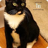 Adopt A Pet :: Tux - Overland Park, KS