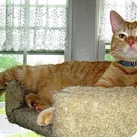 Adopt A Pet :: Rudy - Lebanon, PA