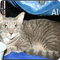 Adopt A Pet :: Alice - Houston, TX